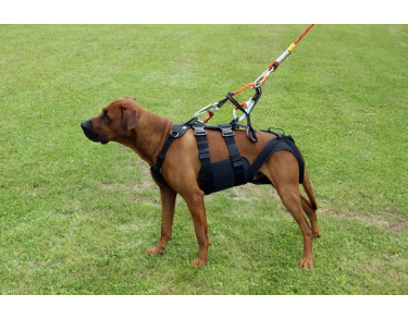 Euroline Dog harness